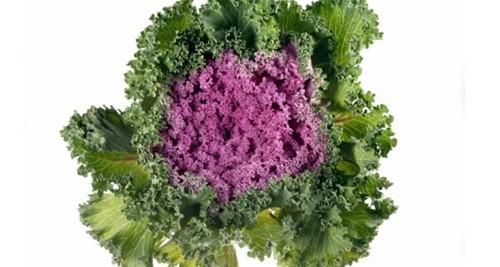 آشنایی با سالمترین سبزیجات برگدار