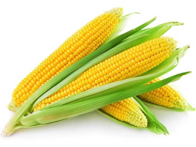 nutritional-value-of-corn