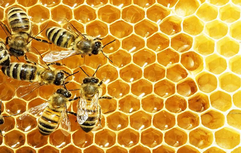 خواص نیش زنبور عسل