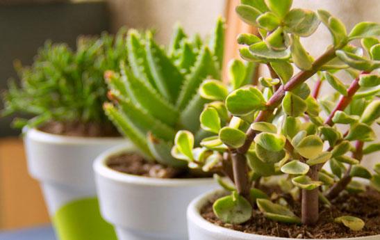 گیاهانی برای افزایش قدرت مغز